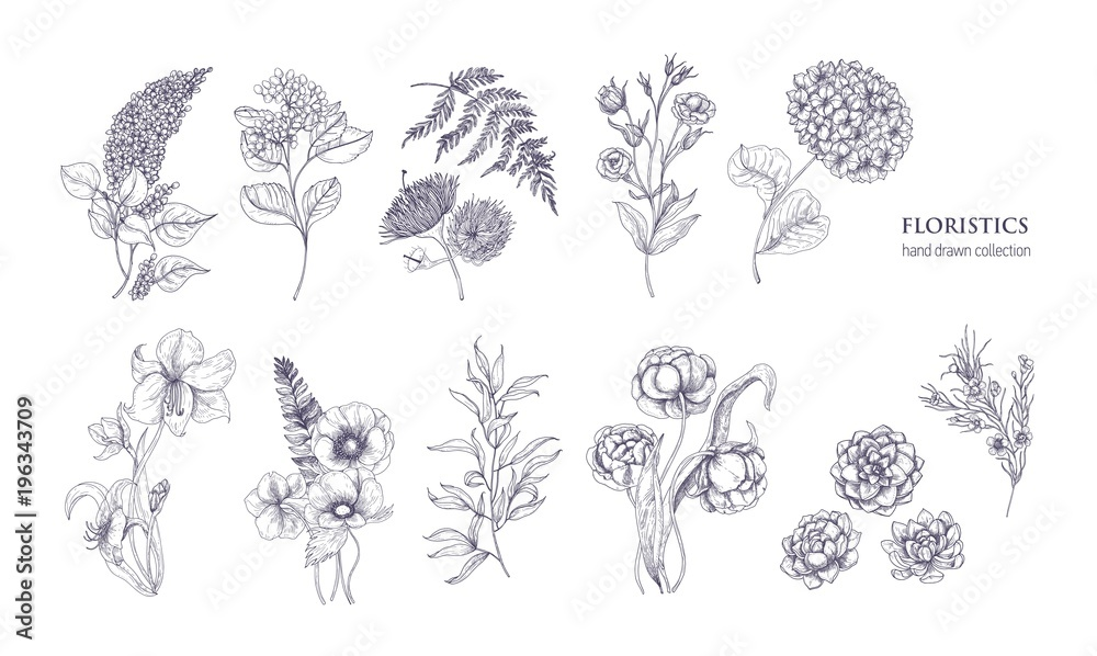 Fototapety, obrazy: Collection of gorgeous floristic flowers and wild flowering plants hand drawn with black contour lines on white background. Bundle of elegant natural decorations. Hand drawn vector illustration.