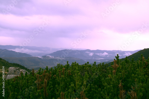 Poster Purper Summer landscape with Carpathian Mountains, Europe. High mountain peaks.