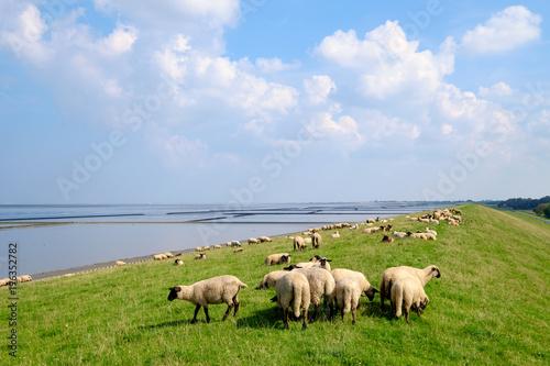 Schafe auf dem Deich Fototapete