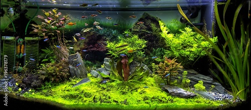 Fotografie, Obraz  Aquarium et poissons tropicaux