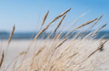 Blades Of Marram Grass On Sand...