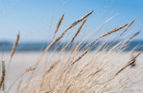 Photo  blades of marram grass on sandy beach