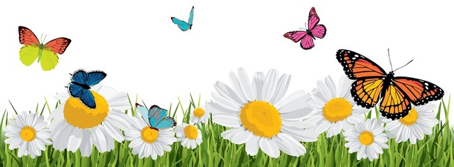 Naklejka background with butterflies, daisies, grass