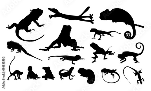 Fotomural set of Various Iguana Silhouette vector illustration, Various chameleon logo vec