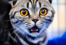 Cute Shocked Cat