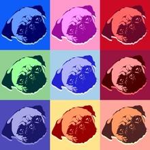 Pug Puppy Dog PopArt Vector