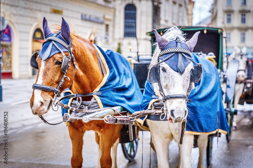 Fotografie, Obraz  Horses in crew waiting to tourists around the beautiful city of Vienna, horses with vintage cab are famous iconic landmark in Vienna, Austria