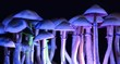 canvas print picture - Color magic mushrooms - psilocybe