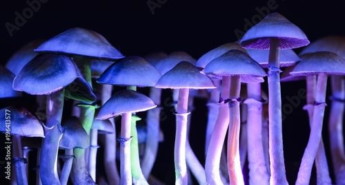 Fotografie, Obraz  Color magic mushrooms - psilocybe
