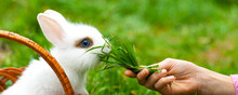 Panorama Of Little Child Is Fe...