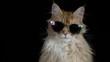 funky disco dj cat kitten