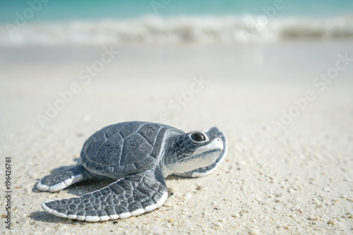 Fotobehang Schildpad Little sea turtle on the sandy beach
