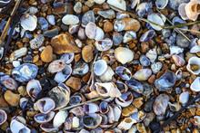 Sea Shells On Sea Shore Poster