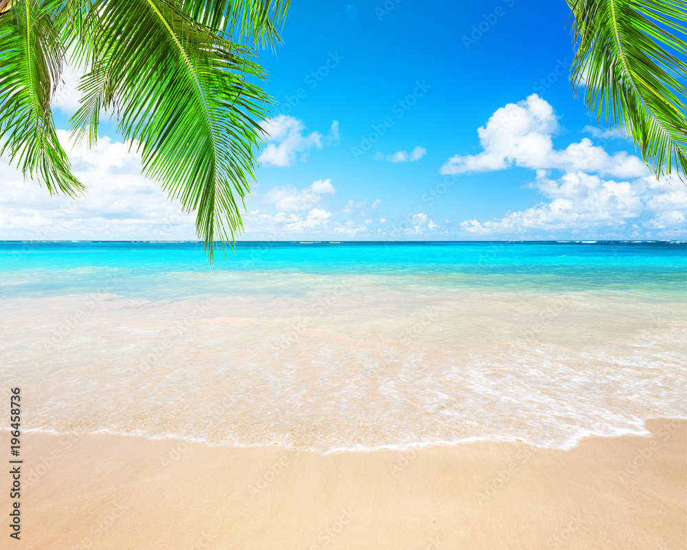 Fototapety, obrazy: Coconut palm trees and blue sky and sea