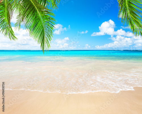 Coconut palm trees and blue sky and sea Wall mural