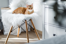 The Red Cat Lies On A White Moss Bed, On A White Stud With Wooden Legs, In A White Bedroom