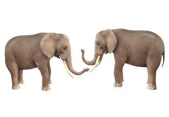 Two elephants. 3D image isolated on white background