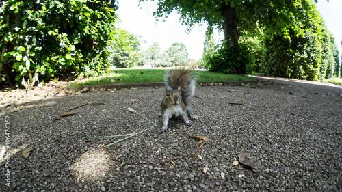 Squirrel in Grosvenor Park, Chester Canvas Print
