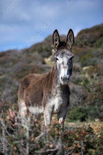 Staande foto Ezel Donkey standing in a field, Strait Natural Park, Tarifa, Cadiz, Andalucia, Spain