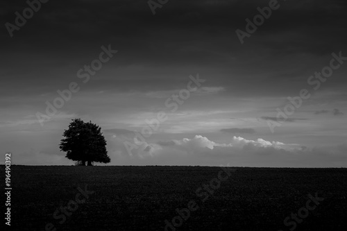 Photo sur Toile Rose Black and white alone tree