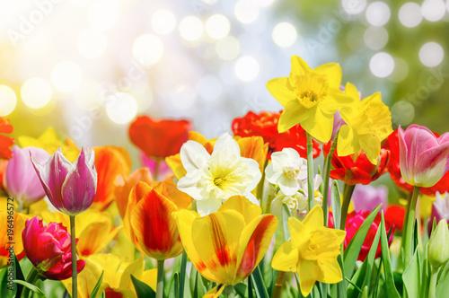 Deurstickers Narcis Bunte Blumen bringen den Frühling.