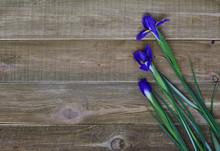 Top View Of Three Blue Iris Fl...