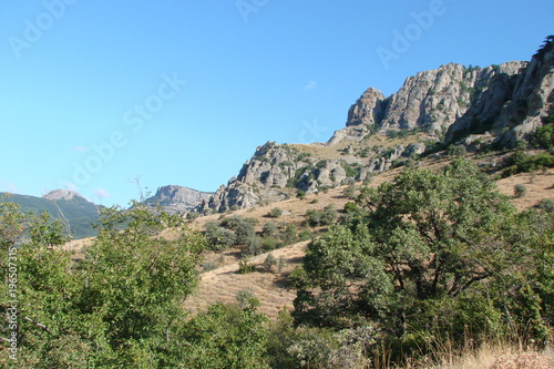 Papiers peints Cappuccino A panorama of wild vegetation at the foot of the Crimean mountain rocks.