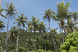Lively palm trees in Guam