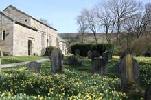 Daffodils In Churchyard, Farnd...