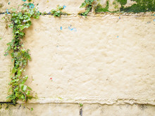 Real Pink Plastered Wall With ...