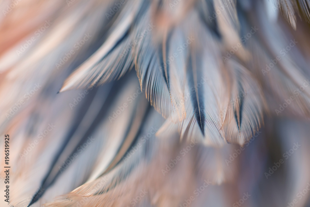 Fototapety, obrazy: Bird and chickens feather texture for background Abstract,blur style and soft color of art design.