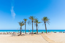 Seaside In Alicante, With Palm...