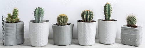 Panoramic view of cactuses in concrete diy pots on a white wall background