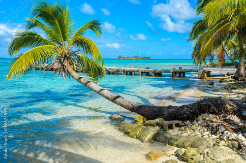 Belize Cayes - Paradise beach on island caye Carrie Bow Cay Field Station, Caribbean Sea, Belize Wallpaper Mural