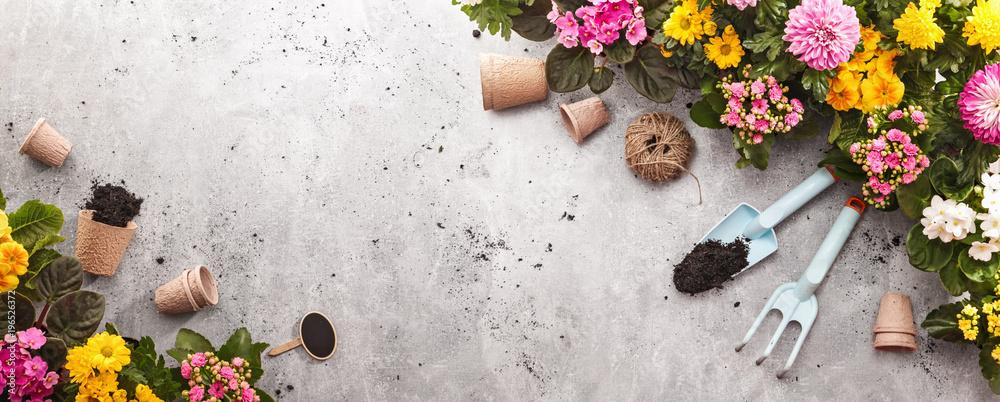 Fototapety, obrazy: Gardening Tools on Shale Background. Spring Garden Works Concept