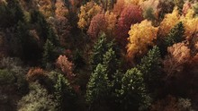 Autumn Forest In Sunny Day.