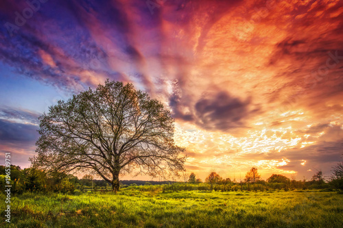 Majestic landscape of bright colorful sunrise over rural meadow with large tree in the spring morning. Beautiful colored cloudy sky on horizon and shining grass from sunlights. Scenery nature