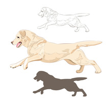 Labrador Dog Running Isolated On White Background. Active Purebred Canine Hand Drawn Sketch And Silhouette.