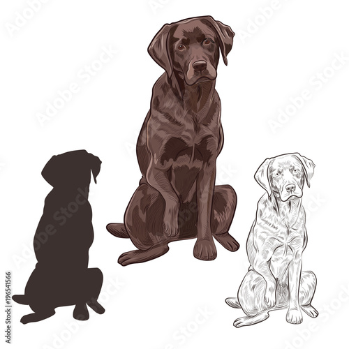 Brown labrador dog sitting isolated on white background Tableau sur Toile
