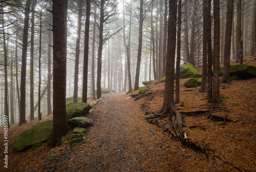 Keuken foto achterwand Bossen Appalachian Trail North Carolina Outdoors Forest Hiking Roan Mountain NC