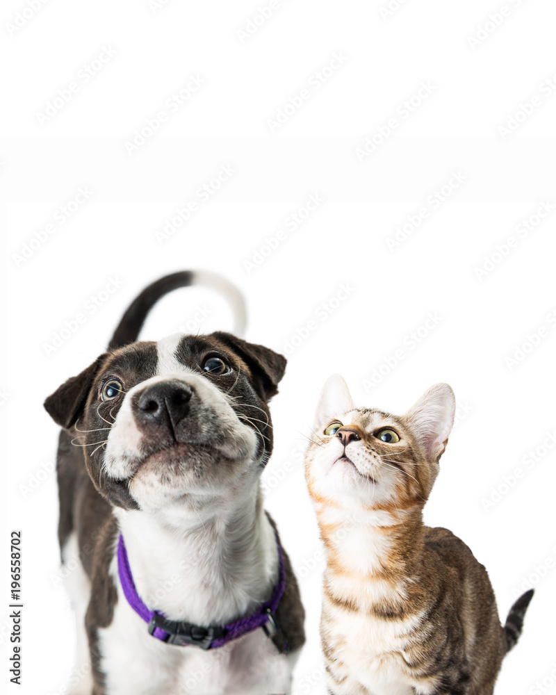 Closeup Cute Puppy and Kitten Looking Up