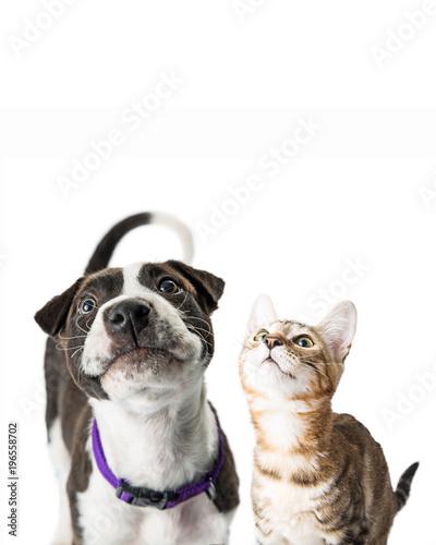 Fotografie, Obraz  Closeup Cute Puppy and Kitten Looking Up