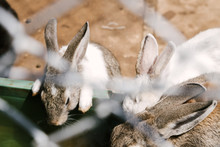 Rabbits Drink Water In Zoo