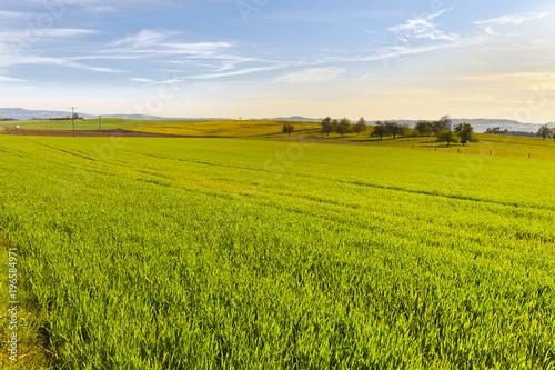 In de dag Pistache Swiss landscape with meadows