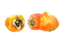 Juicy Orange Persimmon. Waterc...
