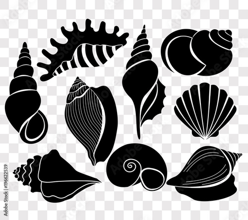 Fotografia Vector illustration set of beautiful sea shells black silhouettes isolated on transparent background