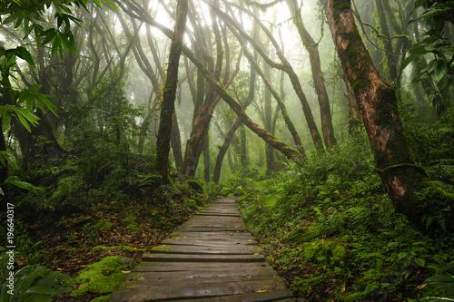 azjatycki-tropikalny-las-deszczowy