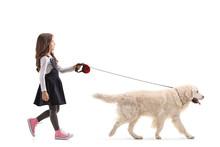 Girl Walking A Labrador Retriever Dog