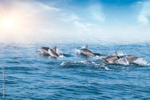 Dolphins jumping under ocean surface lit by sun. Sri Lanka.