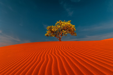 Fototapeta Krajobraz Stunning view of rippled sand dunes and lonely tree growing under amazing blue sky at drought desert landscape. Global warming concept. Nature background